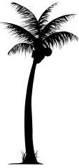 ist2_5332257-palm-trees1