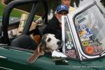 The Basset Hound loves to go for rides with dad in the Sunbeam Tiger.