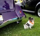 Fountain Valley Car Show38